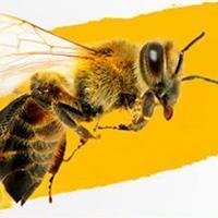 Interaktivní výstava o včelách v OC Nisa Liberec